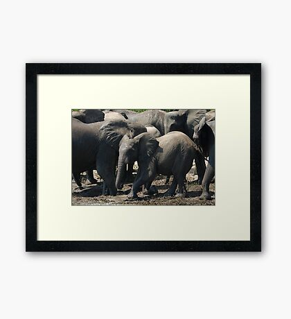 fun in the mud! Framed Print