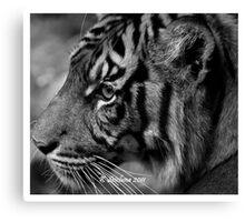 b/w tiger portrait Canvas Print