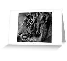 b/w tiger portrait Greeting Card