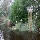 Pampas grass on water by magicaltrails