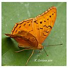 orange butterfly 3 by bluetaipan