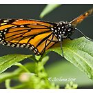 monarch butterfly 2 by bluetaipan