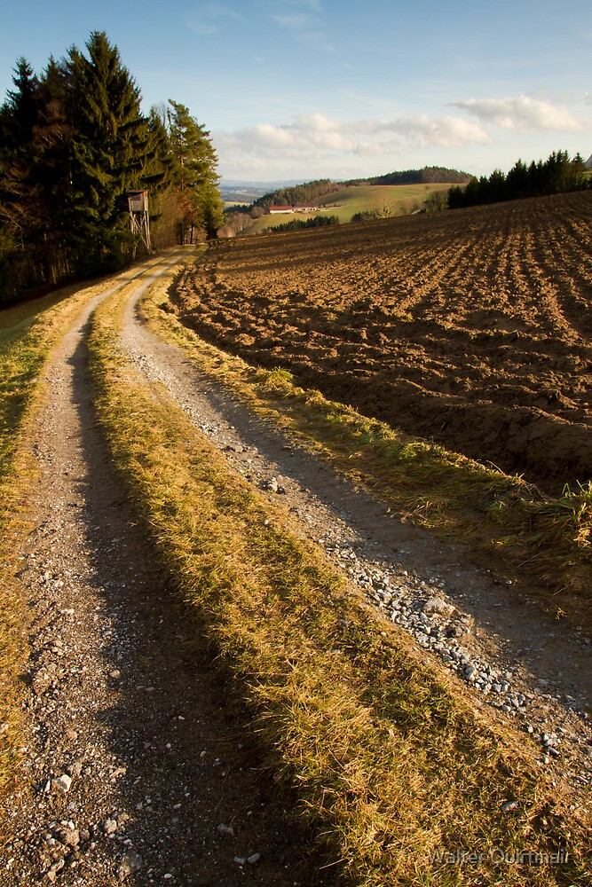 Country Road by Walter Quirtmair