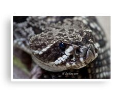 nose of a rattler Canvas Print