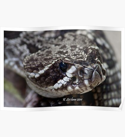 nose of a rattler Poster