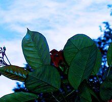 Flower or Creature?, Sri Lanka by Sue Ballyn