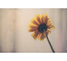 Wondering Photographic Print