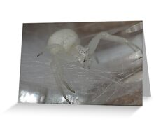 white little crab spider..... Greeting Card
