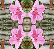 Pink Azaleas 1E kaleidoscope 6 by Christopher Johnson