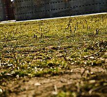 Green Park by donato radatti