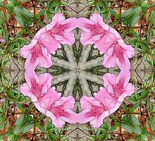 Pink Azaleas 1E kaleidoscope 8 by Christopher Johnson