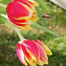 Tulips by Queenicorn