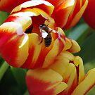 Tulip Vs Wasp by Queenicorn