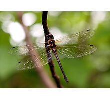 Dragonfly #1 Photographic Print