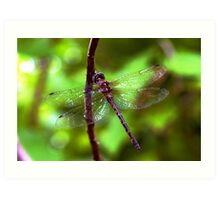 Dragonfly #2 Art Print