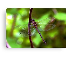 Dragonfly #2 Canvas Print