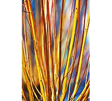 Coloured sticks Photographic Print