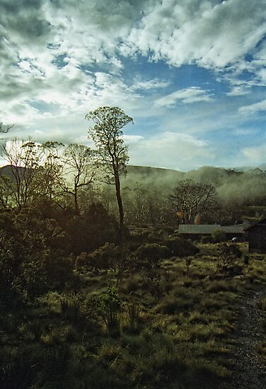 Misty Morning Cradle Mountain by Michael  Moss