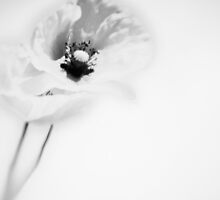 flower/090 by Andreas Schuster