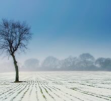 Lonely Tree by cameraimagery