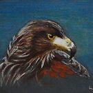 Hawk by Lynn Hughes
