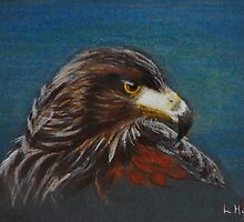 Hawk by Lynn Hughes