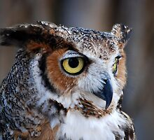 Owl Profile by KeithRandall
