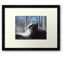 Sweet Baby Blue Framed Print