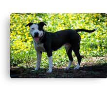 Pit Bull Pedigree Canvas Print