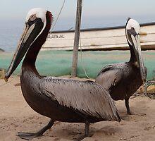 Pelicans I - Pelicanos by Bernhard Matejka