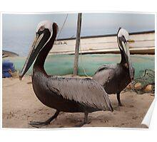 Pelicans I - Pelicanos Poster