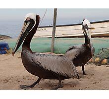 Pelicans I - Pelicanos Photographic Print