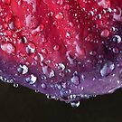 Raindrop Leaf  by DIANE  FIFIELD
