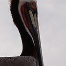 Pelicans III - Pelicanos by Bernhard Matejka