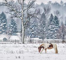 Winter grazing by Daniel  Parent