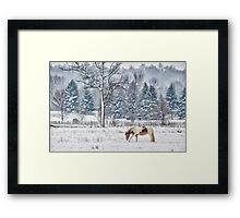 Winter grazing Framed Print
