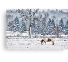 Winter grazing Canvas Print