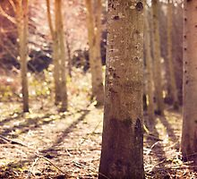 Day 230 - 25th February 2012 by petegrev