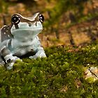 Milk frog on moss by AngiNelson