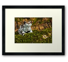 Milk frog on moss Framed Print