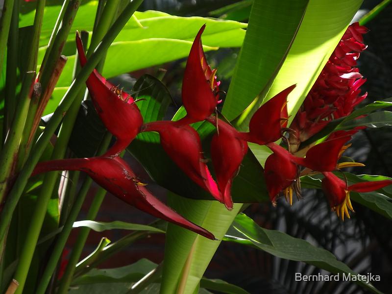 Tropics - Tropical by Bernhard Matejka