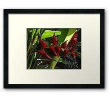 Tropics - Tropical Framed Print