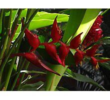 Tropics - Tropical Photographic Print