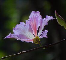 Blossom And Bud - Flor Y Botón by Bernhard Matejka