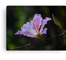 Blossom And Bud - Flor Y Botón Canvas Print