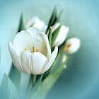Tulips by Rick Haigh