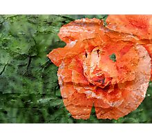 Bark layer Poppy Photographic Print