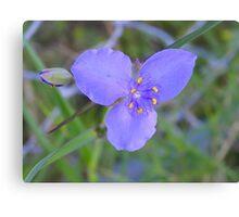 Wild purple flower ~ found @ Port Richie Flordia Canvas Print
