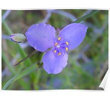 Wild purple flower ~ found @ Port Richie Flordia Poster