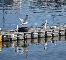 A Diving Platform For Gulls by lynn carter